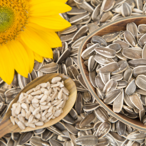 Sunflower Seeds and a Sunflower
